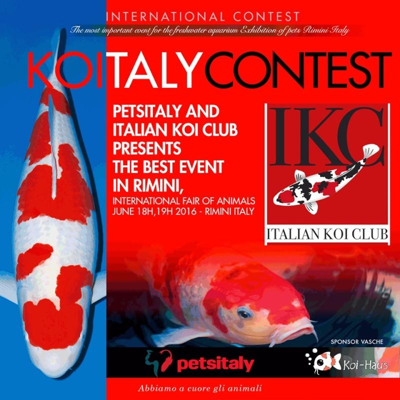 KOI ITALIAN CONTEST 14534410