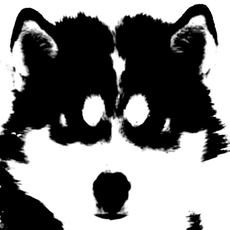 CARNET SEPTENTRIONAL Husky_10
