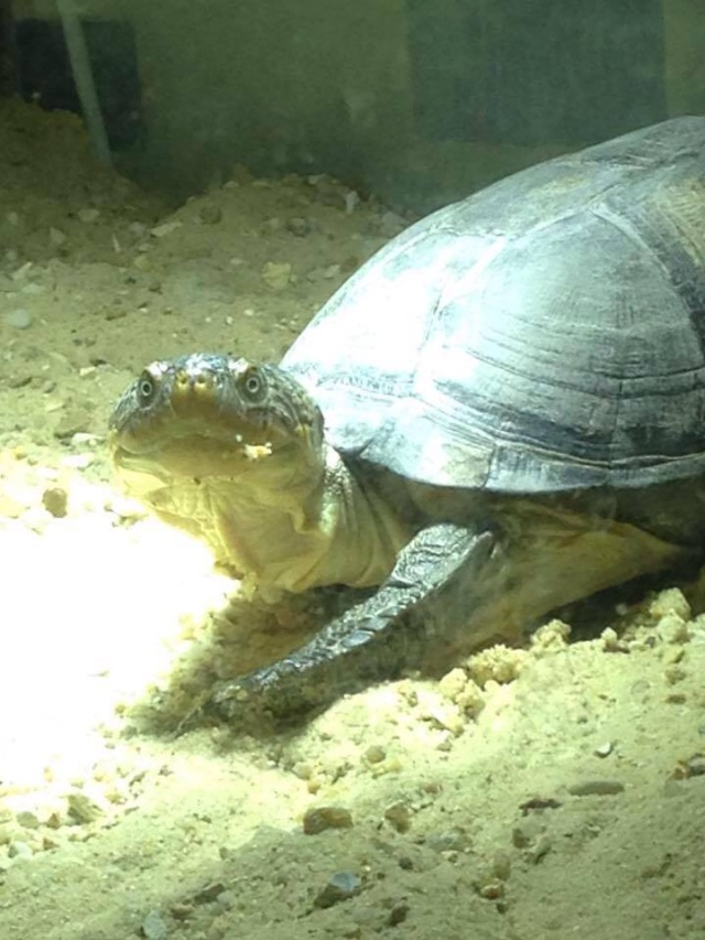 mes 2 petites  tortues - Page 3 12540910