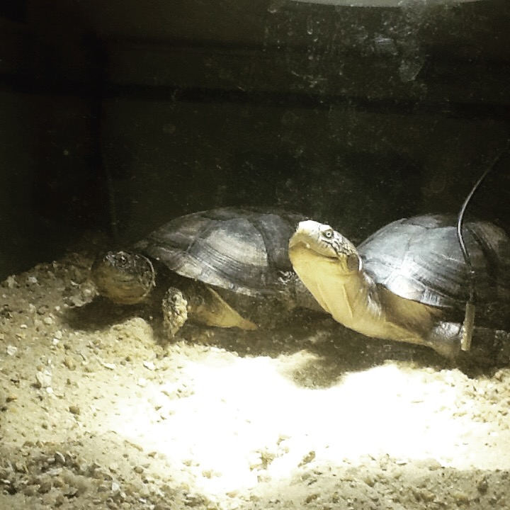 mes 2 petites  tortues - Page 2 Img_3210