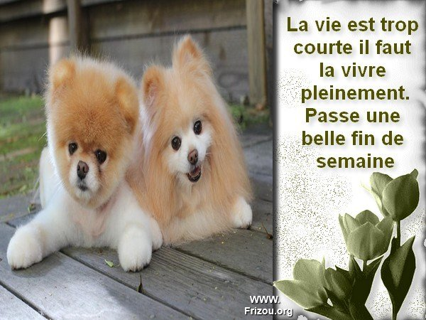 citation image La_vie10