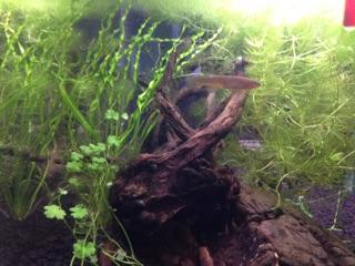 Aqua 60 cm Img_1117