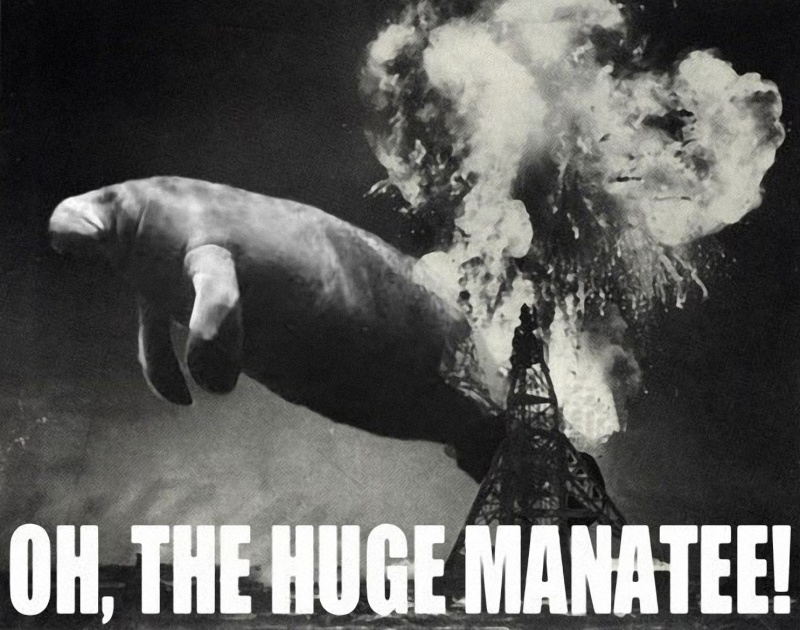 Oh the huge manatee Hugema10