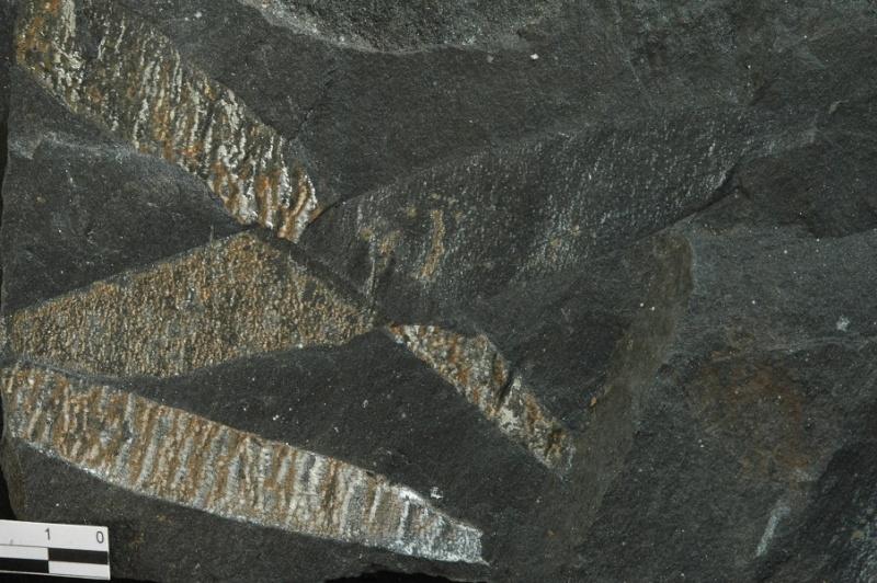 Flore Carbonifère des Alpes Françaises part 1 - Page 2 Vol_9111