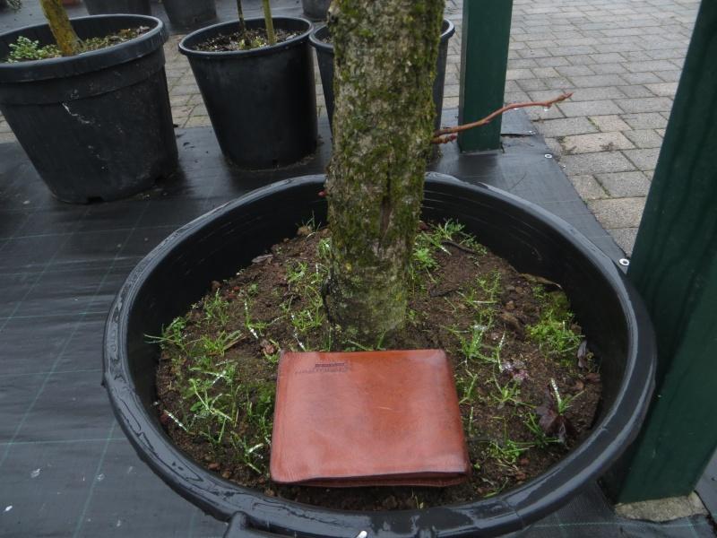 bonsai da grandi piante Img_4521