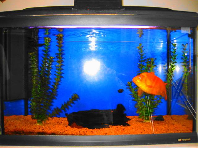 Cibo tartarughe a pesce rosso? Img_2535