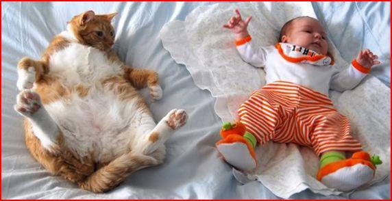 Des photos réconfortantes prouvent que vos enfants ont besoin d'animaux Chat_e10