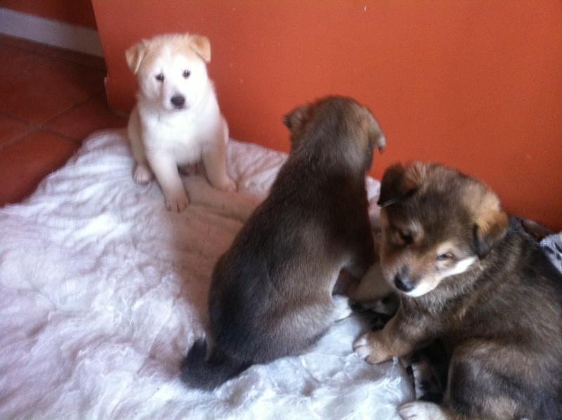 Puppies ! !! Img_1110