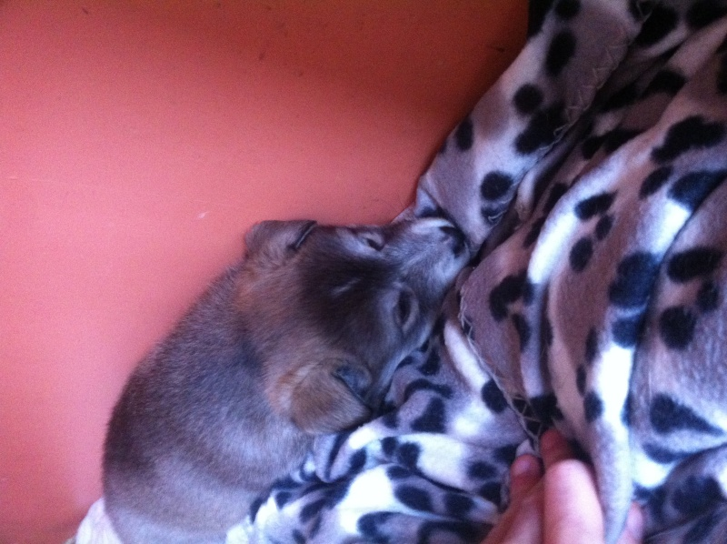 Puppies ! !! Img_1111