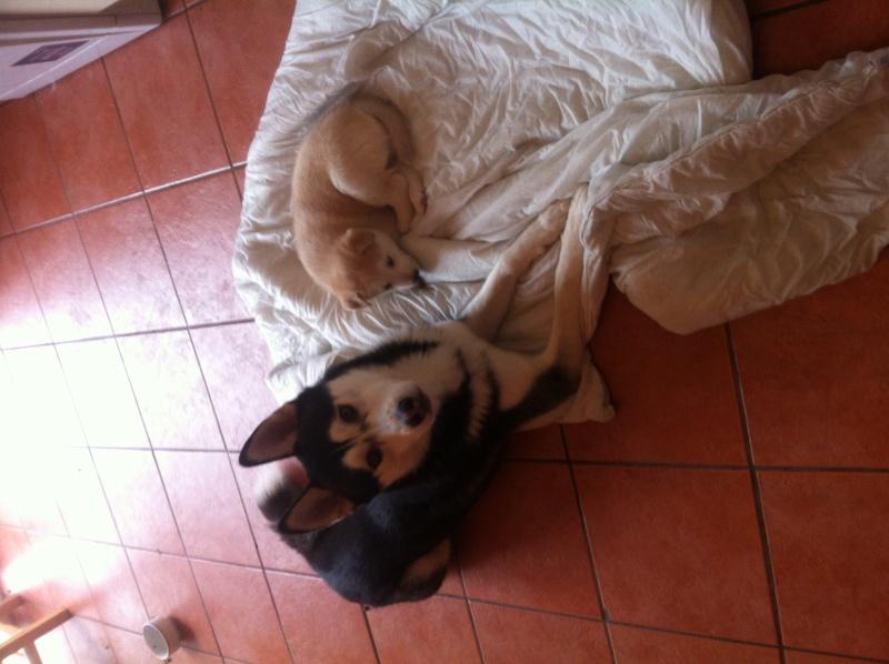 Puppies ! !! Img_1112