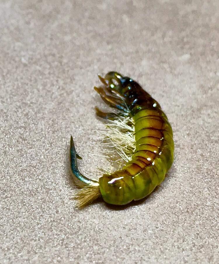 nymphe - Nymphe de larve de trichoptère: Porte bois  - Page 3 Fb_img42