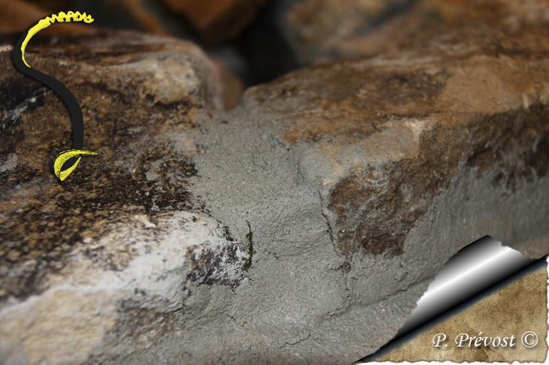 Corallus hortulanus - Avant - Après - Natrix maura 1011