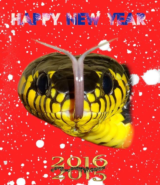 Bonne année !!!  201610