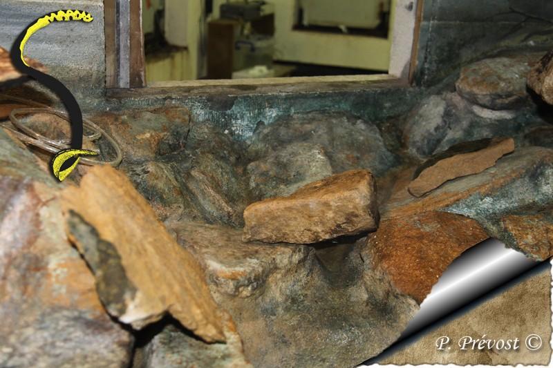 Corallus hortulanus - Avant - Après - Natrix maura 311