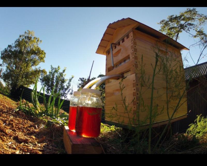 Deux apiculteurs australiens font fortune 511
