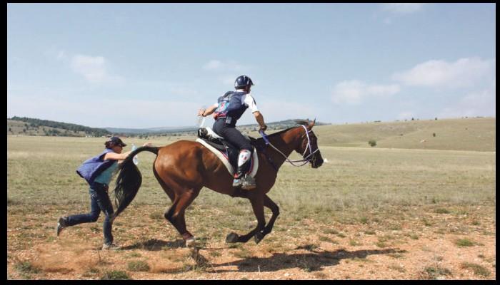 Un cheval breton champion du monde 2015 Sans_367