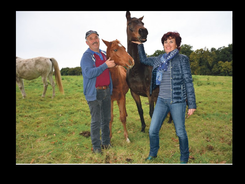 Un cheval breton champion du monde 2015 Sans_368