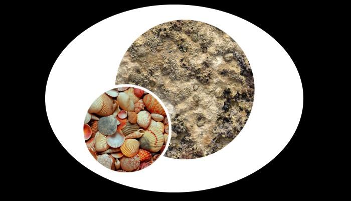 Nous luttons contre l'érosion  et renforçons les ouvrages maritimes naturels et artificiels Sans_566