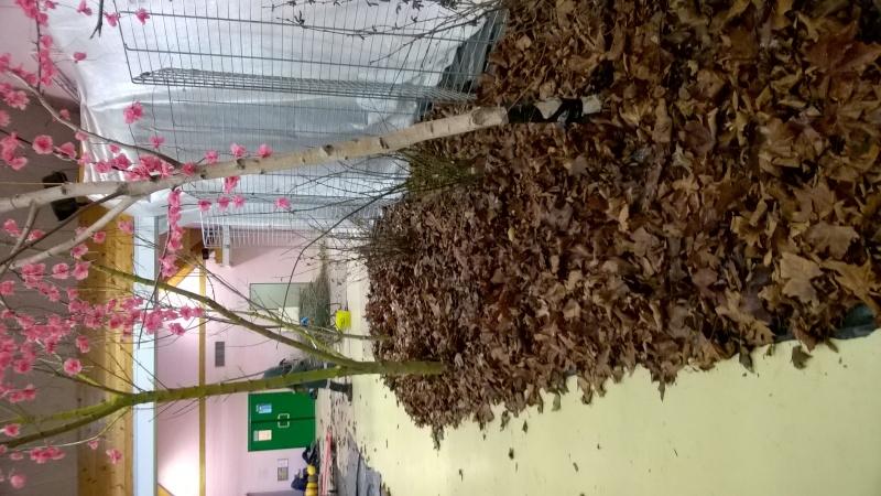 Salon de l'Orchidée à Vervins (02) Wp_20110