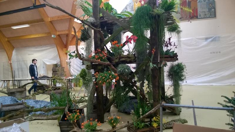 Salon de l'Orchidée à Vervins (02) Wp_20115