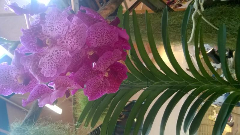 Salon de l'Orchidée à Vervins (02) Wp_20120