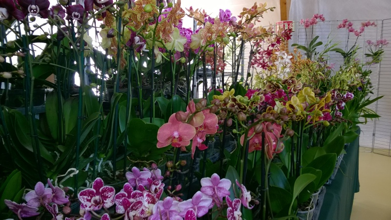 Salon de l'Orchidée à Vervins (02) Wp_20121