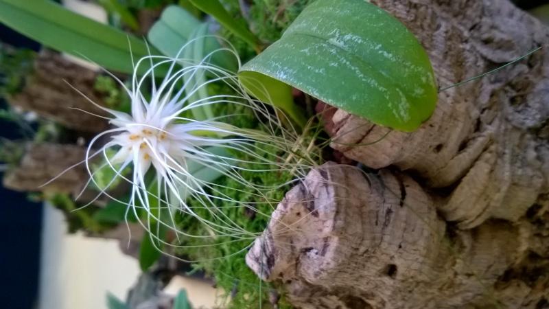 Salon de l'Orchidée à Vervins (02) Wp_20127