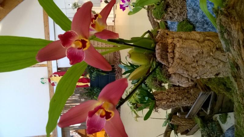 Salon de l'Orchidée à Vervins (02) Wp_20129