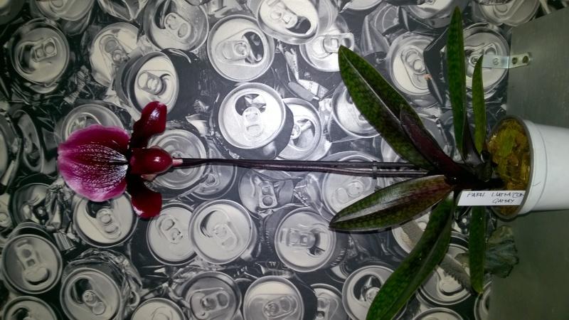 Salon de l'Orchidée à Vervins (02) Wp_20131