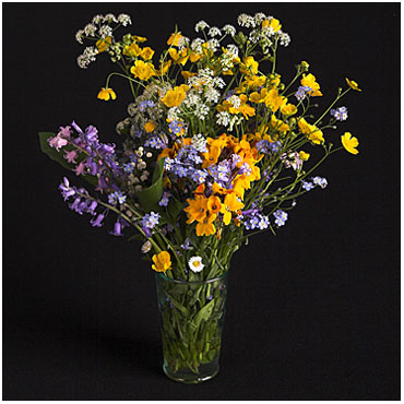 Quelle merveille !!!!! Fleurs10