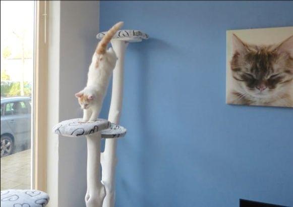 Fabrication Arbre à chat  Arbre10