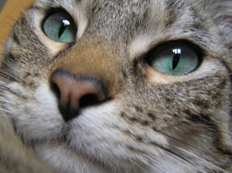 Des chats , encore des chats ^^ P1010010