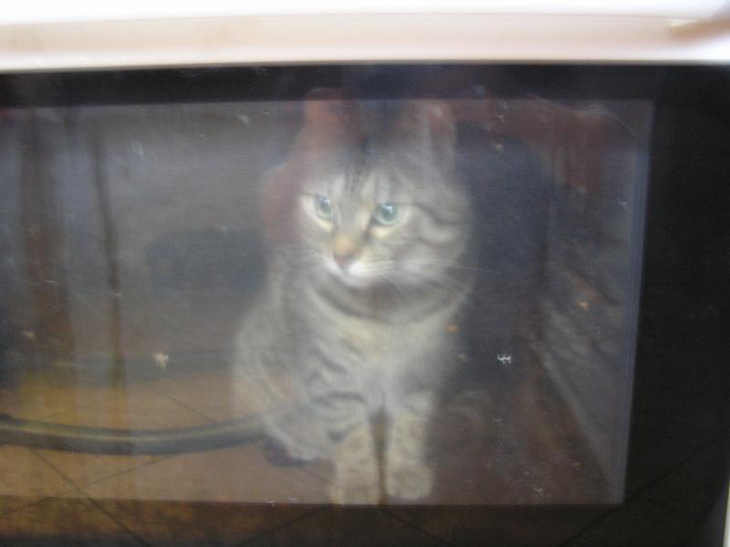 Des chats , encore des chats ^^ P1010011