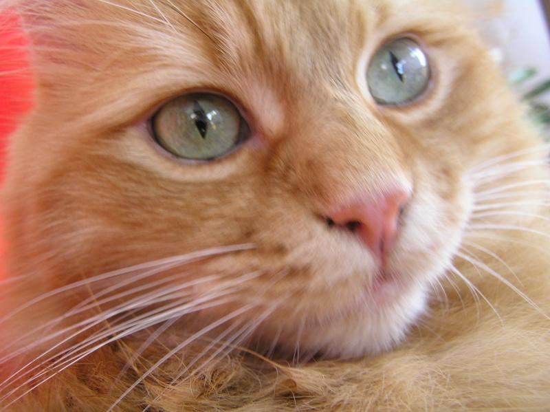Des chats , encore des chats ^^ P1010013