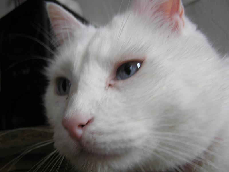Des chats , encore des chats ^^ P1010015