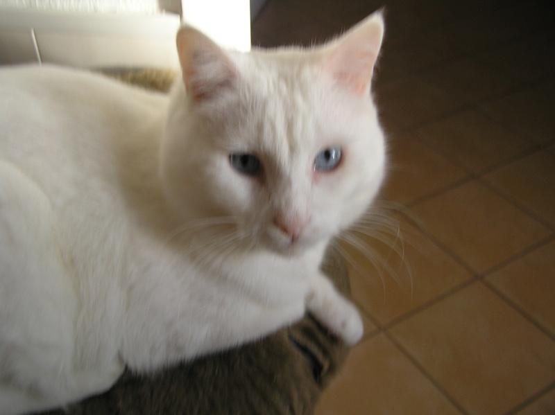 Des chats , encore des chats ^^ P1010016