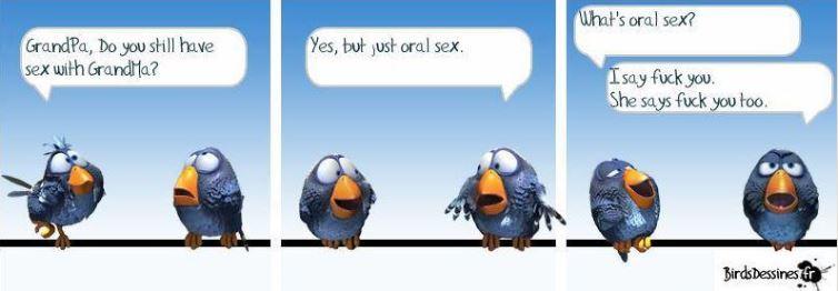 Les Birds Dessinés - Page 2 00000045