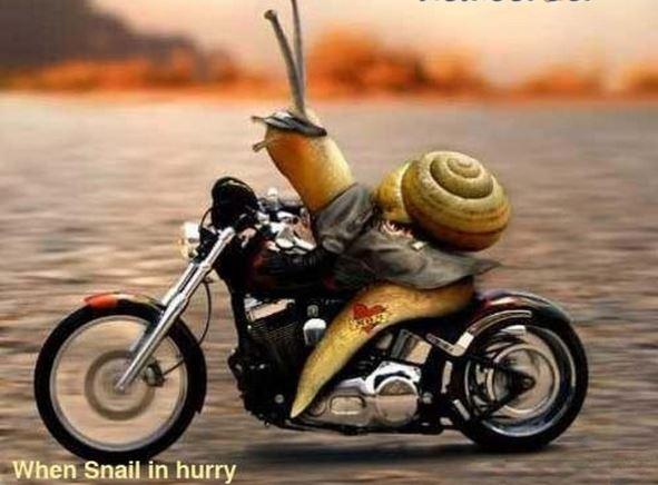 Humour en image du Forum Passion-Harley  ... - Page 3 00000060