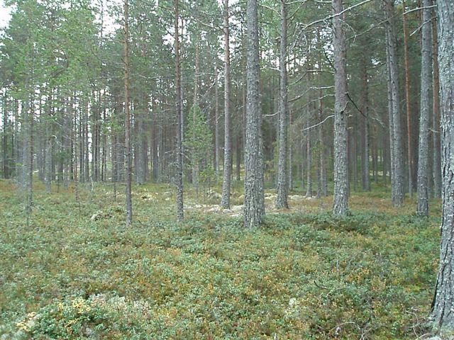 """Norvège : Les """"stavkirke"""", églises en """"bois debout"""", et secondairement bien d'autres aspects de ce magnifique pays et de sa culture... - Page 3 Furusk10"""
