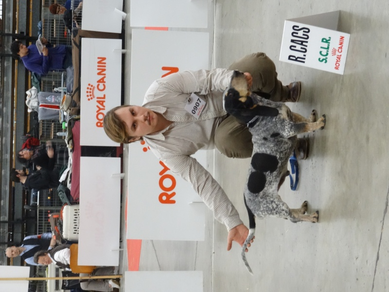 Photos exposition canine Perpignan Dsc01815
