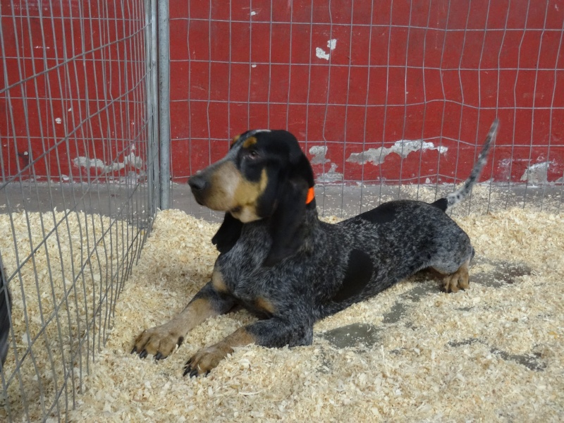 Photos exposition canine Perpignan Dsc01817