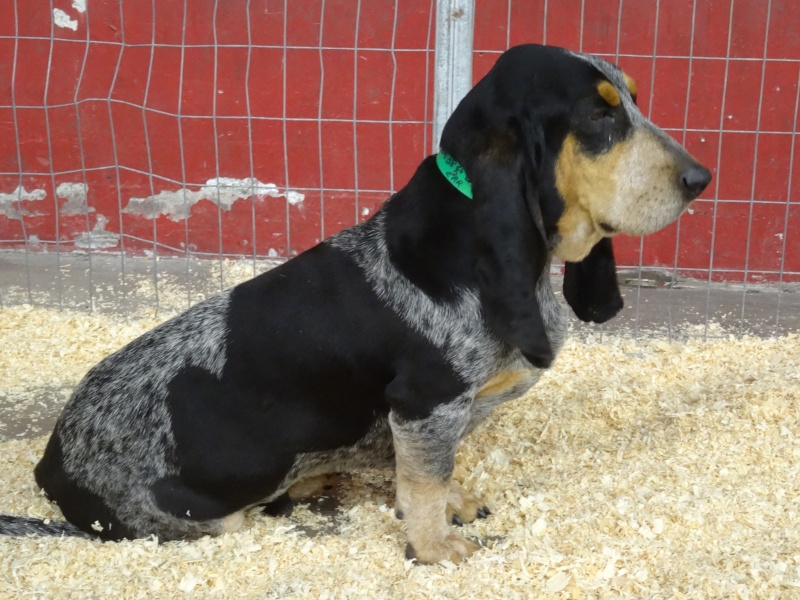 Photos exposition canine Perpignan Dsc01818