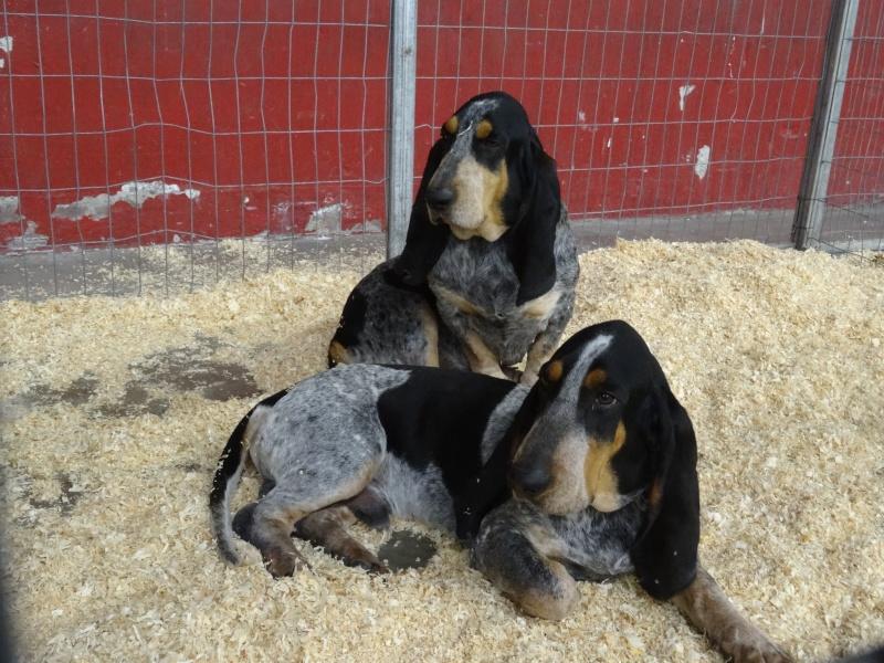 Photos exposition canine Perpignan Dsc01911