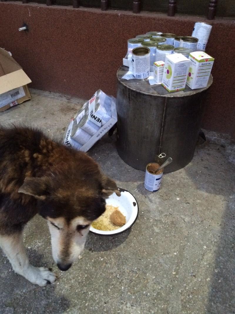 Besoin de médicaments pour un chien de 16 ANS ans en Roumanie Img-2014