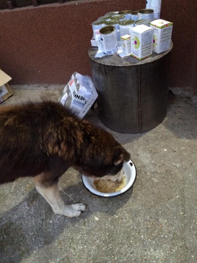 Besoin de médicaments pour un chien de 16 ANS ans en Roumanie Img-2015