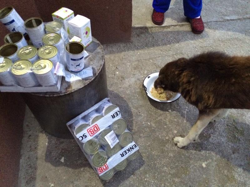 Besoin de médicaments pour un chien de 16 ANS ans en Roumanie Img-2018