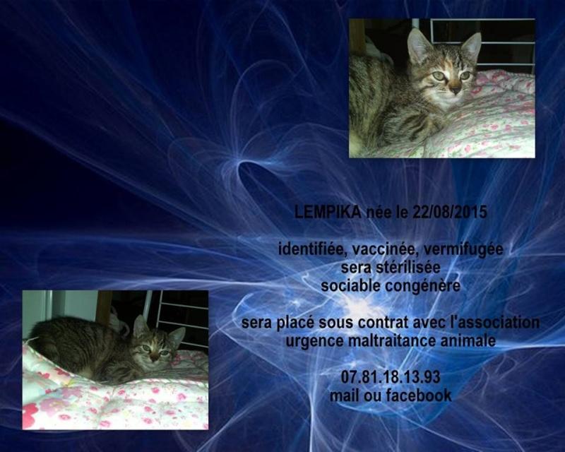 LEMPIKA - femelle tigrée - 08/2015 - UMA (44) Lempik11