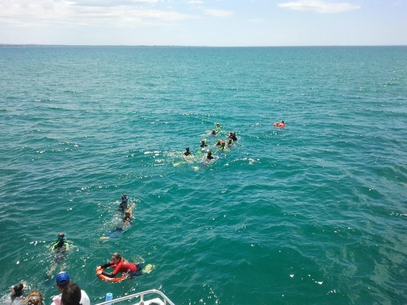 Dolphin swim on Moonraker 2015-125