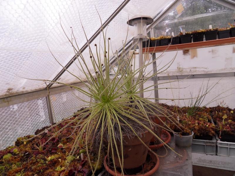 L'hiver et les plantes. Sdc15820