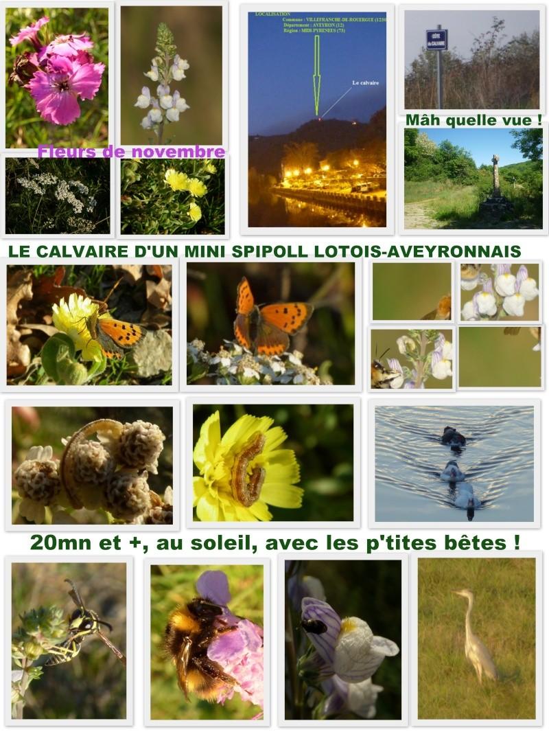 Récidive de mini rencontre Aveyron - Lot  Mini_s10